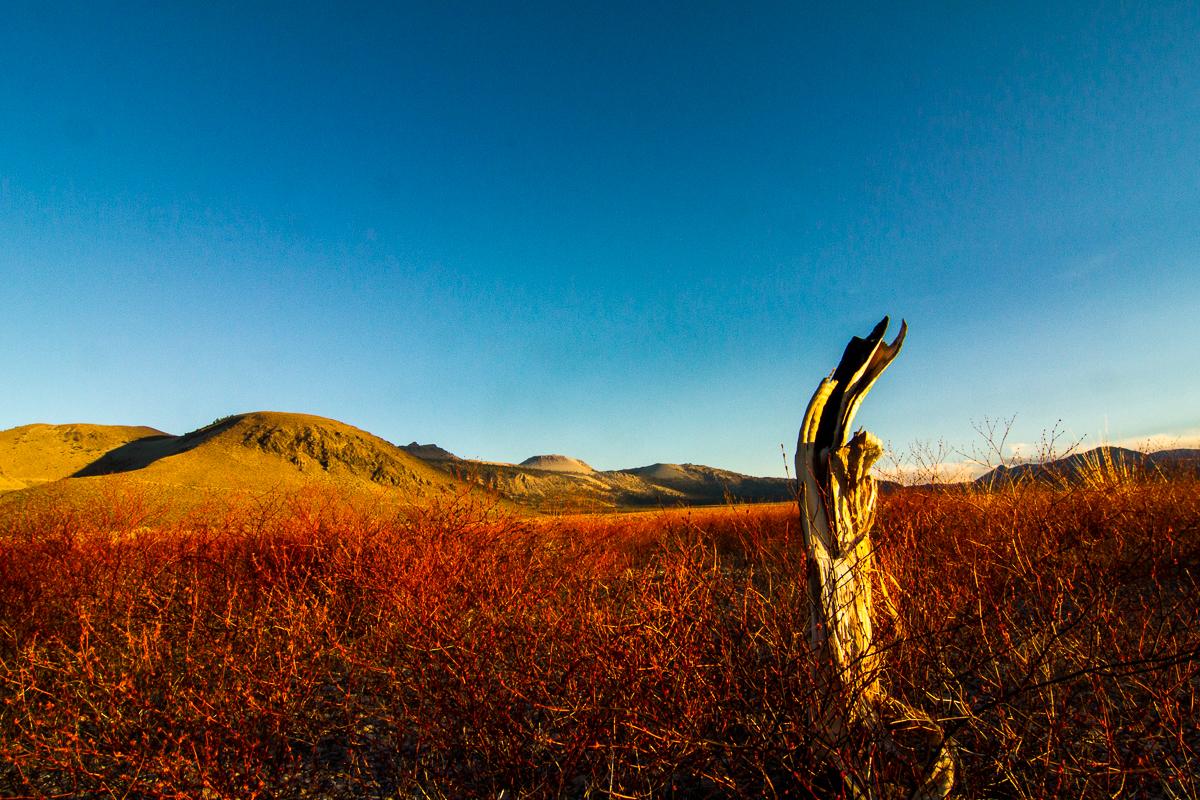 Mono Lake_IMG_6832