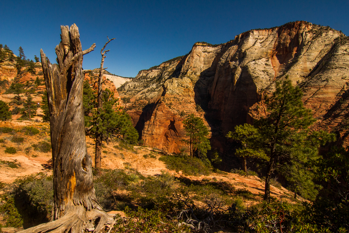 Zion_IMG_9169